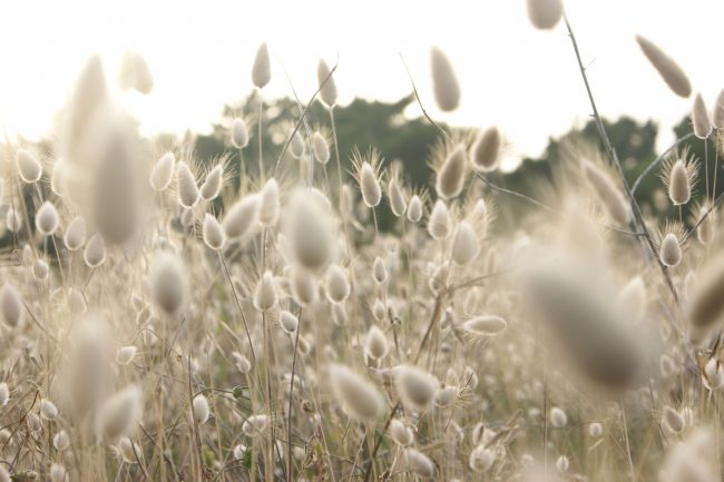 Landscape of reeds